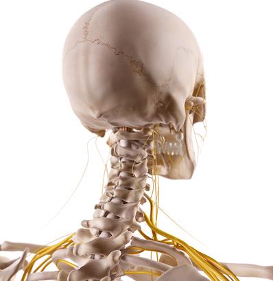 Sintomi cervicali e nervi: il trattamento