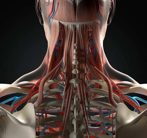 Colpo di Frusta, dolori cervicali associati e cefalea