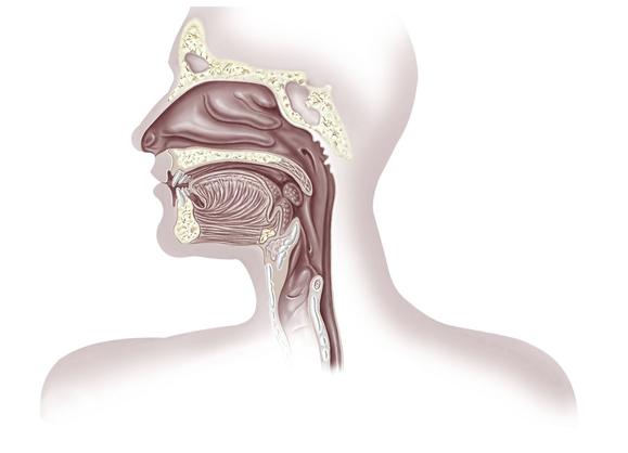Rimedi naturali per il mal di testa da sinusite
